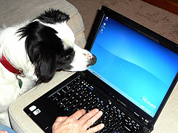 firecracker the dog is fascinated by Linux filesystems