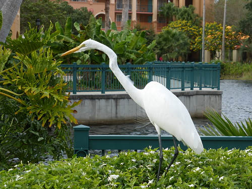 egret at SUSECon 2013