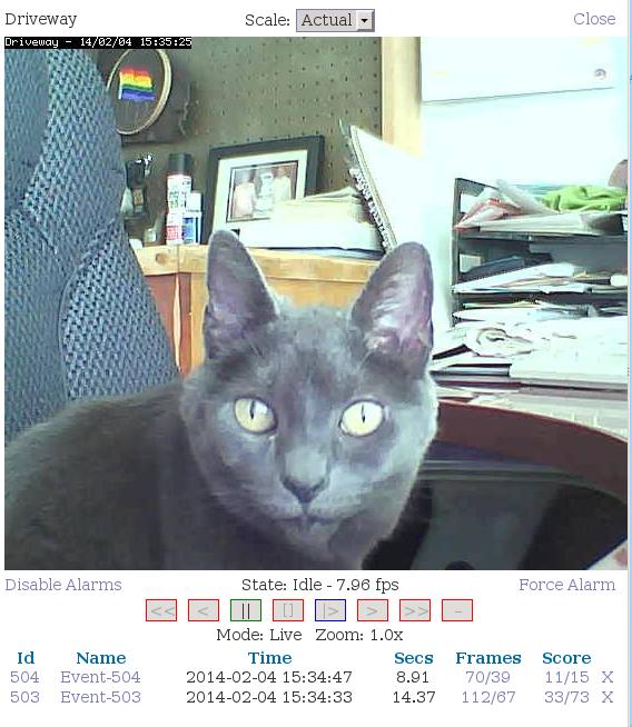 fig-6 cat on the surveillance camera